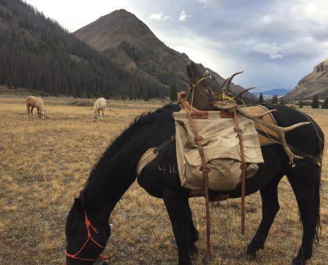 Horse elk